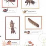 les insectes page de garde