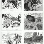 Comparaisons entre « Le Jardin fantastique » et « Les Robinsons d'Insectopolis »…