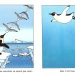 Les Manchots sont de sacrés pingouins Les Manchots volent
