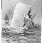 """llustration de """"Moby-Dick"""" en 1892, par A. Burnham Shute"""