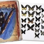 tezuka-papillons