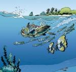 quatrieme de couverture les animaux marins T 3