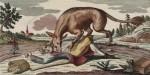 La bête du Gévaudan -  Gravure à l'eau-forte (1764). BNF