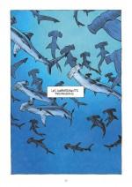 OK Requins 58