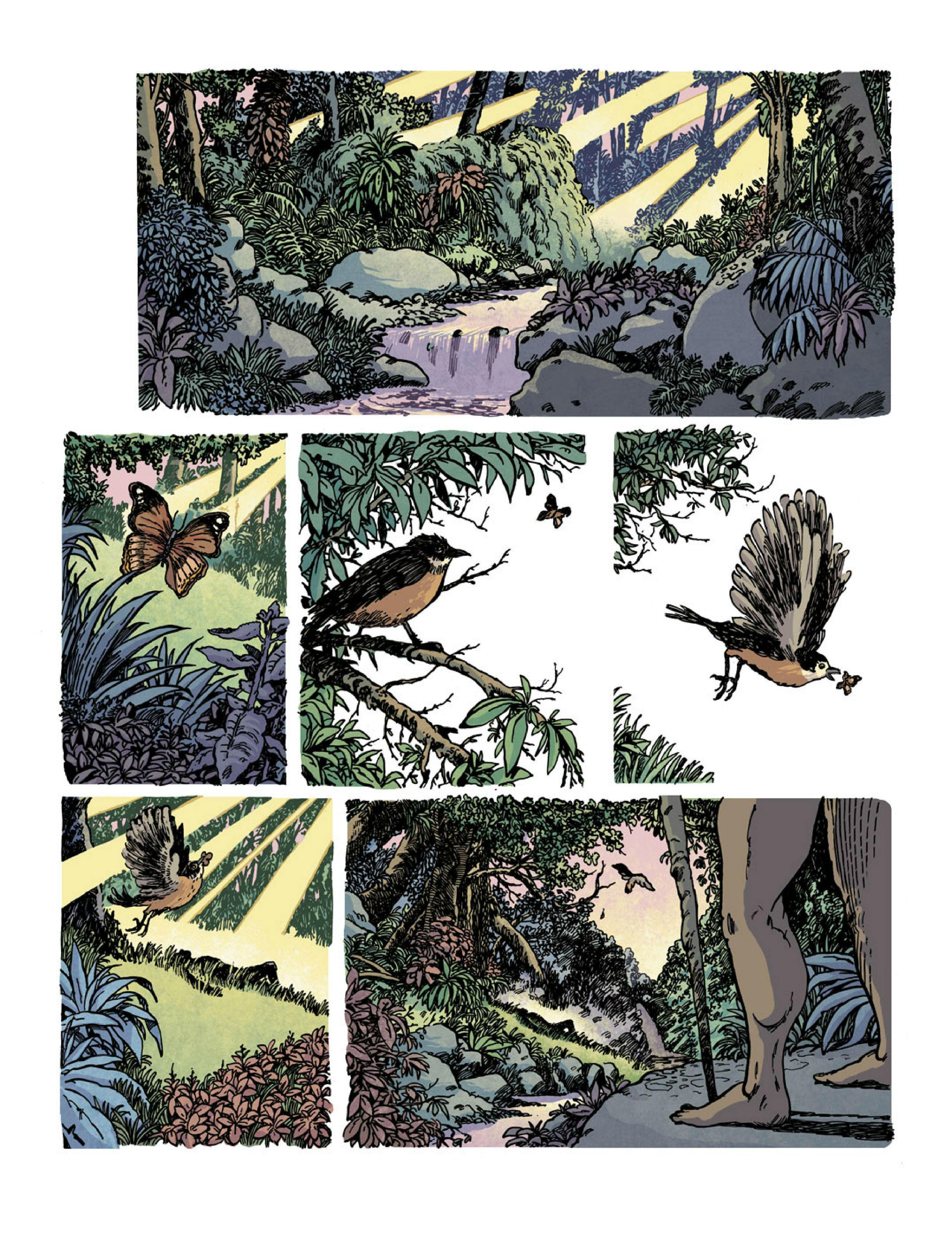 Planche 01 oiseau