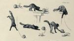 «Des chats» par Théophile-Alexandre Steinlen.