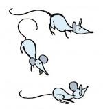 La Maison la nuit les souris