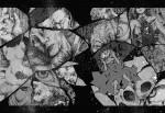 Sleeping_Charon-cauchemard