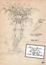 """Extrait de l'herbier des mandragores d'Ichabod Vambéry pour le projet """"Namta"""""""