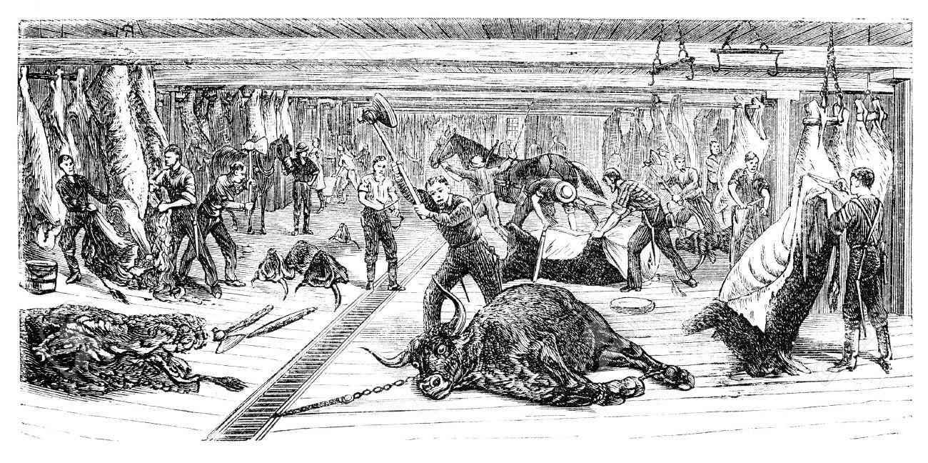 Un abattoir de Chicago. Illustration d'Ernst von Hesse-Wartegg en 1880.
