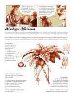 Mandragore page 8