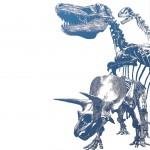 Blue-Hole-squelettes